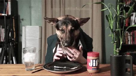 Анимация Собака сидит за столом и ест человеческими руками