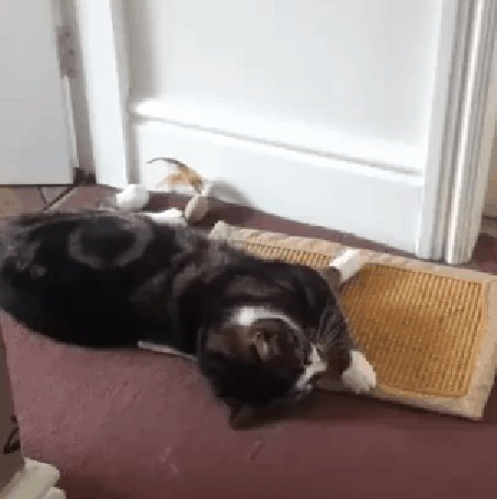Анимация Кот резко просыпается, вскакивает и ударяется об шкаф (© Anatol), добавлено: 21.10.2015 15:39