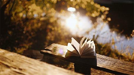 Анимация Открытая книга лежит на лавочке