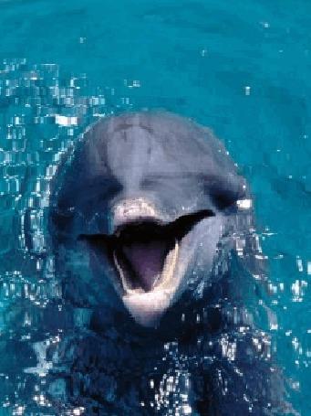 Анимация Милый дельфин высунул голову из воды и улыбается