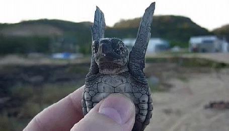 Анимация Черепаха пытается взлететь