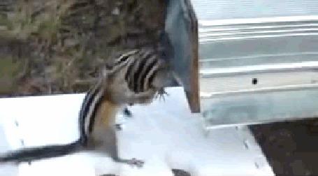 Анимация Бурундук пытается затащить своего друга в почтовый ящик