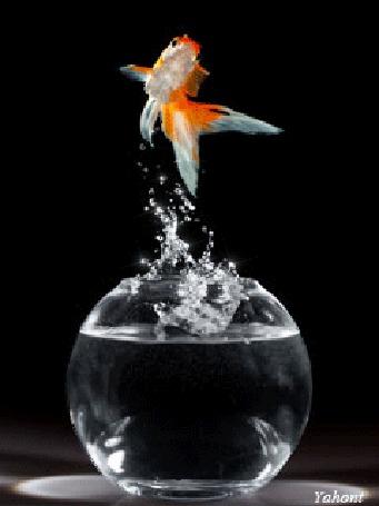 Анимация Золотая рыбка выпрыгнула из сосуда с водой, Yahont