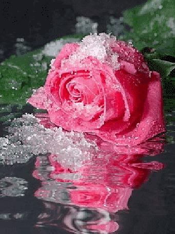 Самые красивые цветы в мире ( Очень много)