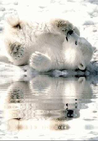 Анимация Белый медвежонок лежит в снегу у края воды