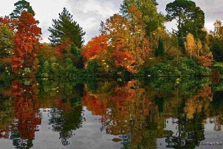 Анимация Осенний лес отражается в воде, Lamerna