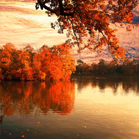 Анимация Осенний лес и лесное озеро