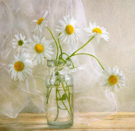 скачать гиф цветы белые