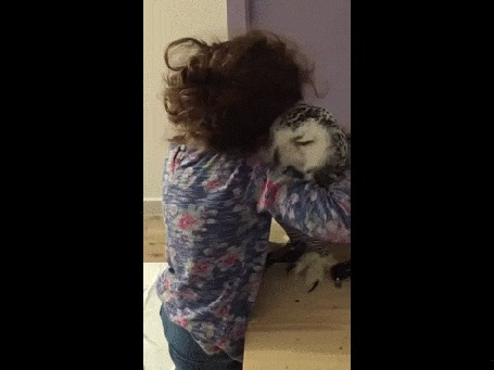 Анимация Маленькая девочка тискает сову, а та мужественно это терпит (© Anatol), добавлено: 03.11.2015 00:30