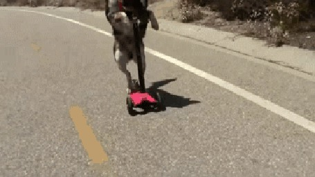 Анимация Собака несется по шоссе на самокате (© Anatol), добавлено: 03.11.2015 16:34
