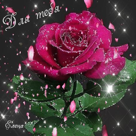 Анимация Бордовая роза под падающими лепестками, Для тебя, ву Елена