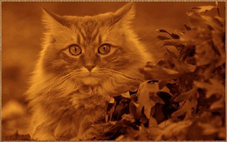 Анимация Рыжий кот сидит рядом с опавшими листьями, на него падают желтые листья, автор pasiqut
