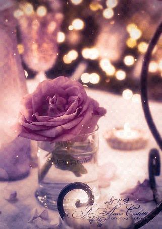 Анимация Нежная розовая роза стоит в стеклянном стакане с водой на столе рядом со свечами, на стакане надпись SUPERGIF, фотограф Anne Goletti, автор анимации DIZA