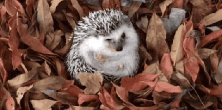 Анимация Ежик копошится в осенней листве
