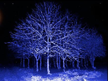 Анимация Ясная зимняя ночь, по небу плывет Луна, с деревьев сыплется легкий снежок (© Миропия_Мира), добавлено: 08.11.2015 11:30
