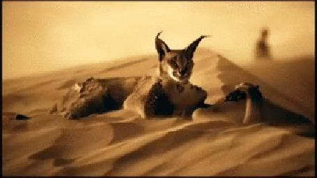 Анимация Анимированный фрагмент выставки-инсталяции канадского художника Грегори Кольбера / Gregory Colbert/, мальчик и рысь в пустыне (© Akela), добавлено: 09.11.2015 02:10