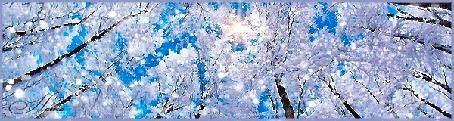 Анимация Обильный снегопад между заснеженных деревьев, устремивших свои вершины к голубому небу, Ната (© Akela), добавлено: 09.11.2015 02:21
