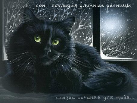 Анимация Черный кот закрывает глаза, за окном идет снег и светит Луна (сон погладил длинные ресницы, сказки сочиняя для тебя.), Mira