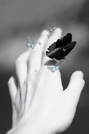 Анимация На руке, от которой взлетают маленькие серые бабочки, сидит крупная черная бабочка