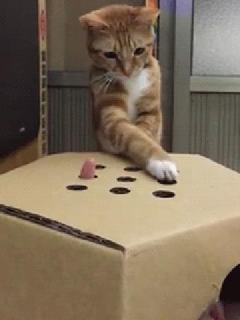 Кот знак вопроса