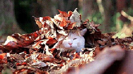 Анимация Кот в осенней листве
