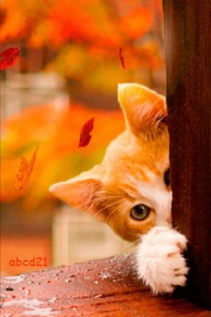 Анимация Рыжий, выглядывающий котенок под листопадом, ву abcd21