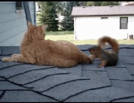 Анимация Белка на черепичной крыше дома устраивает игры с рыжим котом и похоже ему это нравится