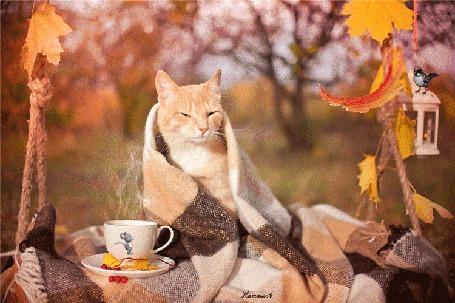 Анимация Рыжий кот укутанный в теплый плед, сидит на качели, возле него стоит чашка с чаем, на котором нарисована бегущая мышка, на светильнике с горящей свечой сидит птичка, сверху падает осенний лист, Наташа А