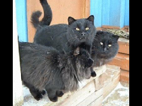 Анимация Три черных кота любуются первым снегом