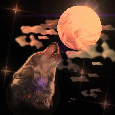 Анимация Волк воет на луну