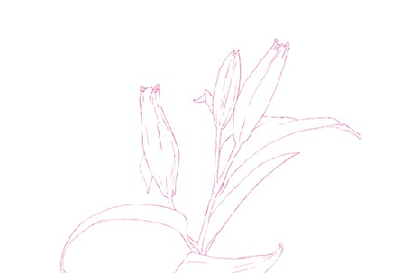 Анимация Распускающиеся цветы на белом фоне (© Krista Zarubin), добавлено: 23.11.2015 12:26
