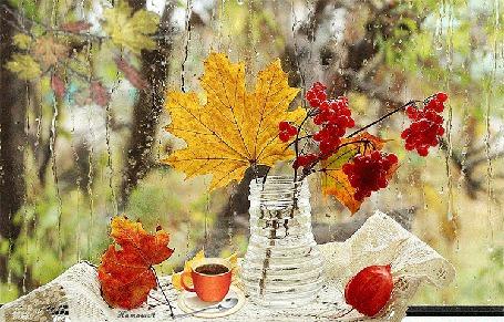 Анимация Натюрморт с веточками красной рябины, сухого кленового листа, в вазе с водой, стоящей рядом на блюдце чашке горячего кофе, на фоне окна с осенним пейзажем и стекающими каплями дождя по стеклу, НаташаА (© НаташаВ), добавлено: 26.11.2015 16:45