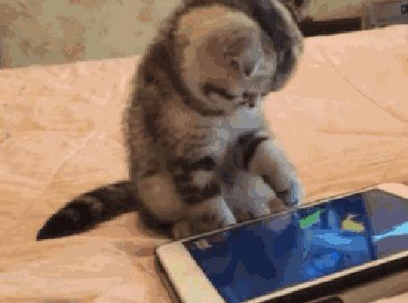 Анимация Котенок пытается поймать рыбку, плавающую на экране