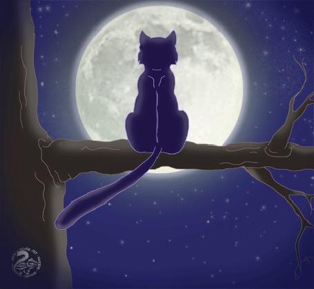 Анимация Кошка сидит на ветке дерева на фоне полной луны, by Nojjesz
