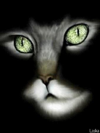 Анимация Кот с белой бородкой, белыми усами и сверкающими глазами, Laska