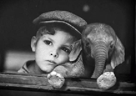 Анимация Мальчик рядом со слоненком у окна