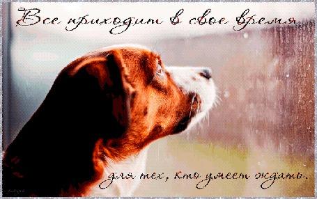 Анимация Собака внимательно смотрит через окно во двор, по стеклу стекают капли воды, (Все приходит в свое время для тех, кто умеет ждать), автор pasiqut
