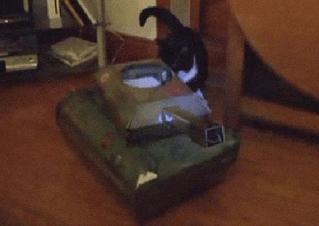 Анимация Кот нападает на другого кота, сидящего в игрушечном танке