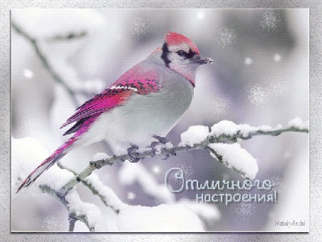 Анимация Птичка с цветным оперением сидит на заснеженной ветке (Отличного настроения!), Nataly Archi (© Natalika), добавлено: 19.12.2015 09:27