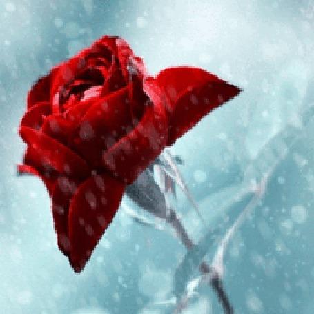 Анимация Роза во льду