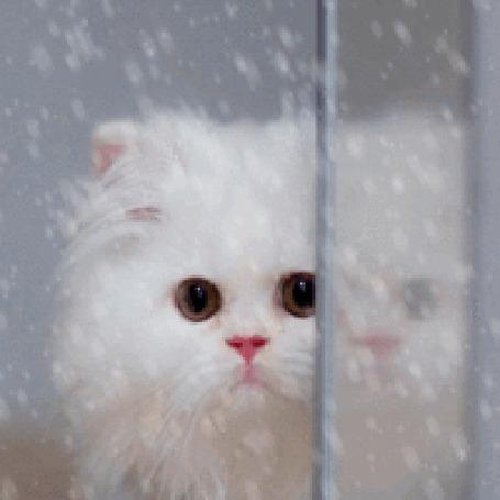 Анимация Котик смотрит на снег за окном