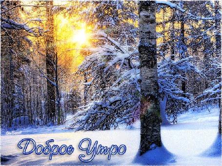 Анимация Лучи солнца светят сквозь деревья в зимнем лесу (Доброе Утро), автор от Барков
