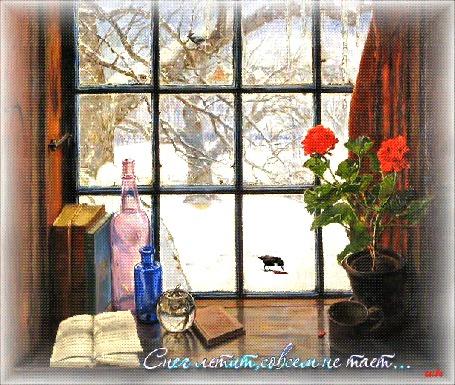 Анимация На подоконнике стоит горшок с красными розами, кружка, книги, бутылки разных размеров и книга с перелистывающимися страницами, за окном идет снег и птицы клюют что-то на ветках дерева и на земле, (Снег летит, совсем не тает.), автор Leila