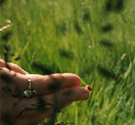 Анимация Божья коровка на руке девушки