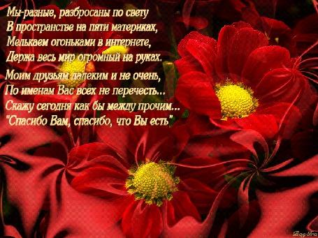 Анимация На фоне переливающихся красных цветов написаны слова благодарности друзьям, (Мы разные, разбросаны по свету В пространстве на пяти материках, Мелькаем огоньками в интернете, Держа весь мир огромный на руках. Моим друзьям далеким и не очень, По именам Вас всех не перечесть. Скажу сегодня как бы между прочим. Спасибо Вам, спасибо, что Вы есть), автор BagIra (© Solnushko), добавлено: 23.12.2015 17:30