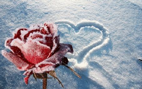 Анимация Красная роза в инее и сердечко на снегу