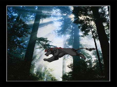 Анимация Волк летит, быстро перебирая лапами, в волшебном лесу, ву Т-Йоки (© Anatol), добавлено: 28.12.2015 00:23