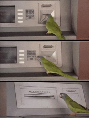 Анимация Попугай у банкомата
