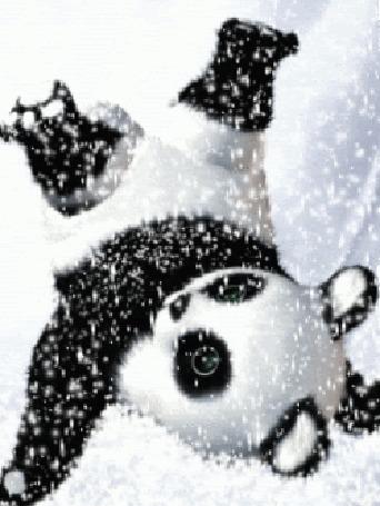 Анимация Панда играется под снегом