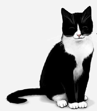 Анимации коты черные